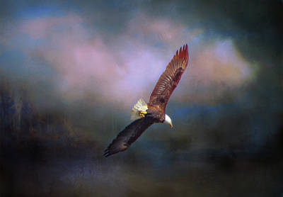 Photograph - Soaring Eagle by Marilyn Wilson