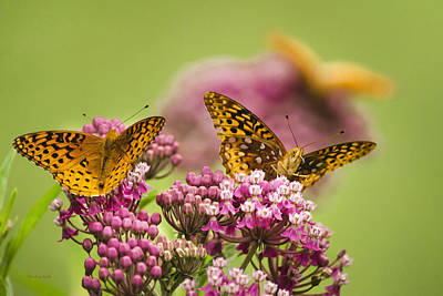 Photograph - Social Butterflies by Christina Rollo