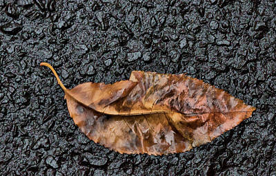 Photograph - Sodden Leaf by Cate Franklyn