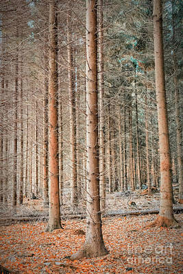 Photograph - Soderasens Autumn Forest by Antony McAulay
