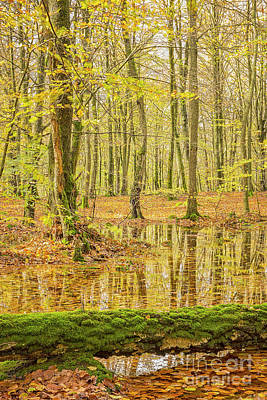 Photograph - Soderasens Autumn Woodland by Antony McAulay