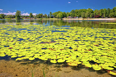 Photograph - Soderica Lake Green Landscape And Water Lilys View by Brch Photography
