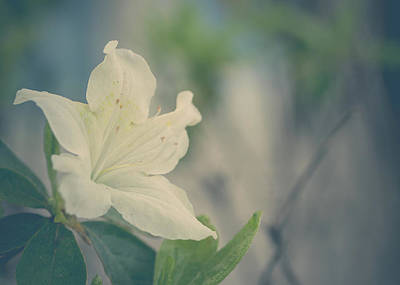 Photograph - Soft And Beautiful by Joni Eskridge