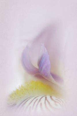 Art Print featuring the photograph Soft And Delicate Iris by David and Carol Kelly