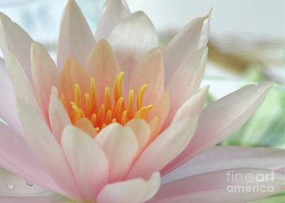 Photograph - Soft And Delicate Water Lily by Sabrina L Ryan