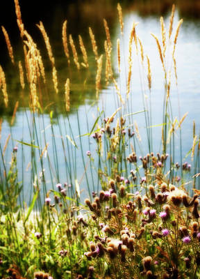 Nature Photograph - Soft And Surreal by Marilyn Hunt