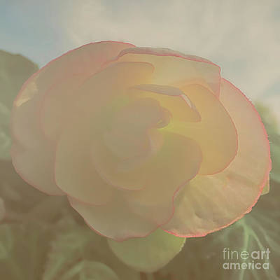 Digital Art - Soft And  Sweet Begonias by Luther Fine Art