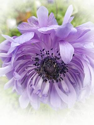 Photograph - Soft Anemone by Rachel Hannah