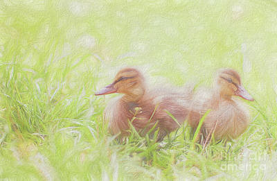 Photograph -  Soft Baby Ducks by Peggy Franz