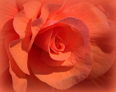 Photograph - Soft Begonia by AJ  Schibig