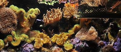 Photograph - Soft Corals  by Puzzles Shum