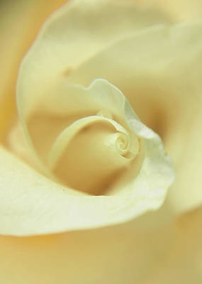 Photograph - Soft Cream by Nathan Little
