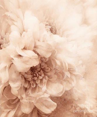 Travel Rights Managed Images - Soft Dahlia Royalty-Free Image by Arlene Carmel