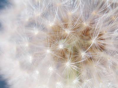 Digital Art - Soft Dandelion Wishes by Mia DeBolt