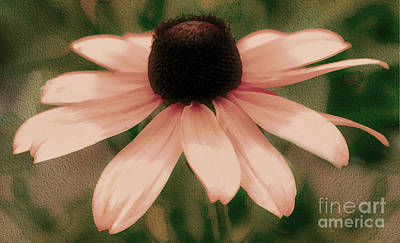 Photograph - Soft Delicate Pink Daisy by Judy Palkimas