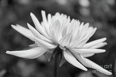 Photograph - Soft Details Black And White by John S