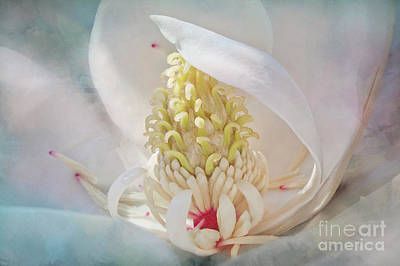 Photograph - Soft Elegance- Magnolia Collection 1 by Janie Johnson