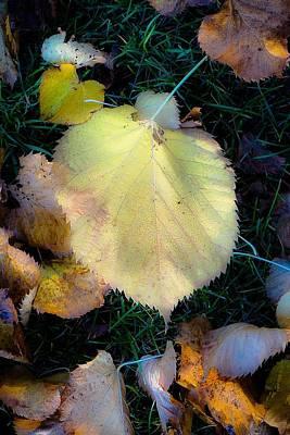 Photograph - Soft Fall Floor Pop No.2 by Desmond Raymond