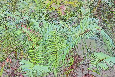 Photograph - Soft Ferns by Florene Welebny