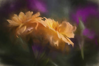 Photograph - Soft Floral by Ron Grafe