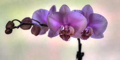 Digital Art - Orchids by Patrick Groleau
