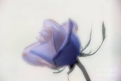 Photograph - Soft Focus Rose by Carole Martinez