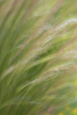Photograph - Soft Foucs, Close-up Of Desert Grasses Blowing In The Wind by Barbara Rogers Nature Inspired Art Photography