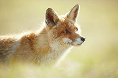 Laugh Photograph - Soft Fox by Roeselien Raimond