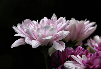 Photograph - Soft Glow by Andrew Mcdermott