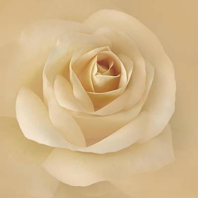 Rose Portrait Photograph - Soft Golden Rose Flower by Jennie Marie Schell