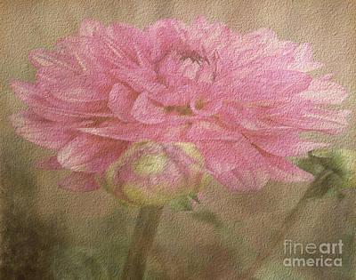 Photograph - Soft Graceful Pink Painted Dahlia by Judy Palkimas