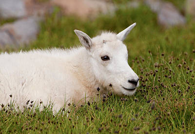 Photograph - Soft Grass by Kent Keller
