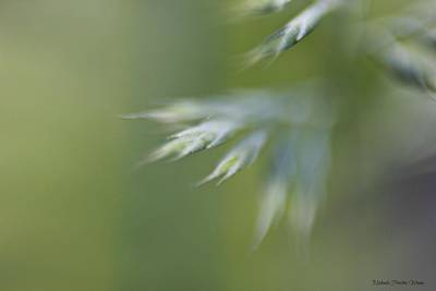 Photograph - Soft Green by Michaela Preston