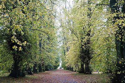 Soft Green Walkway Art Print by Niel Morley
