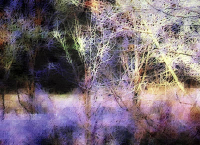 Photograph - Soft by Jodie Marie Anne Richardson Traugott          aka jm-ART