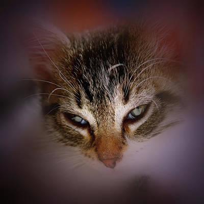 Wall Art - Photograph - Soft Kitten by David G Paul