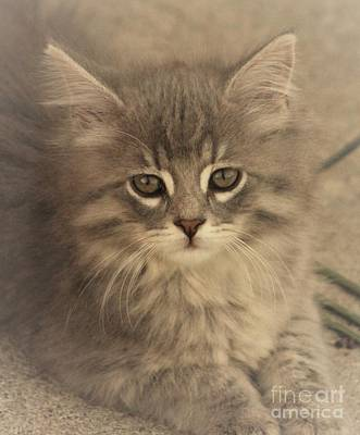Petcare Photograph - Soft Kitty by Tammy Miller