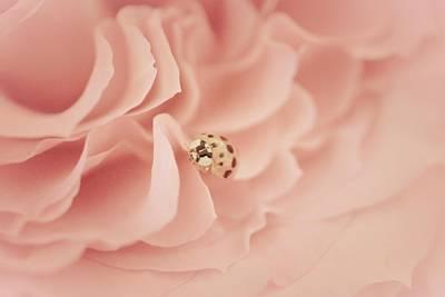 Ladybugs Photograph - Soft Lady Of Rose by The Art Of Marilyn Ridoutt-Greene