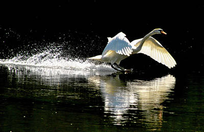 Photograph - Soft Landing  by Joe Ormonde