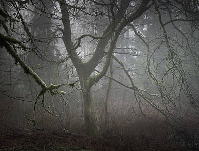Photograph - Soft Light And Misty Trees by Adam Gibbs