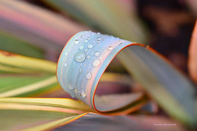 Photograph - Soft Like Morning Dew by Donna Blackhall