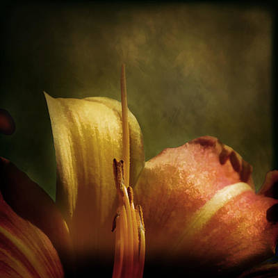 Art Print featuring the photograph Soft Lily by Gary Smith