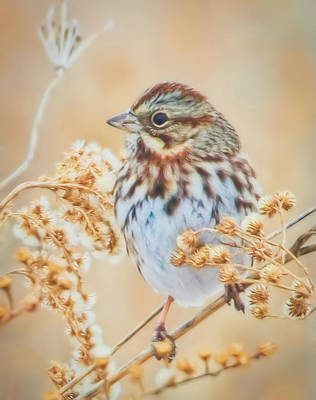 Wall Art - Photograph - Soft Painted Song Sparrow by Martin Belan