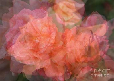 Roses Photograph - Soft Pastel Roses Abstract by Carol Groenen