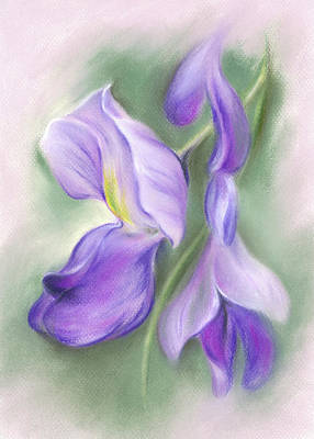 Pastel - Soft Pastel Wisteria Flowers by MM Anderson