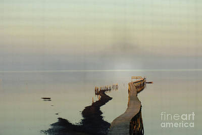 Photograph - Soft  Walk by Joy Angeloff