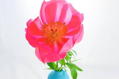 Photograph - Soft Peony Flower Isolated. by Iryna Soltyska