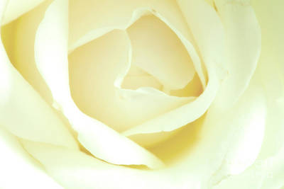 Photograph - Soft Petals by Jim Orr