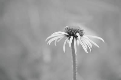 Photograph - Soft Petals by Tim Good