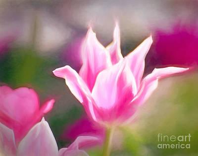 Photograph - Soft Pink 5 by Kerri Farley